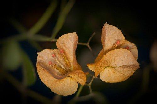 Yellow flowery thing