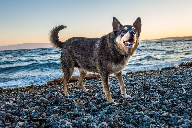 Alaska at the beach